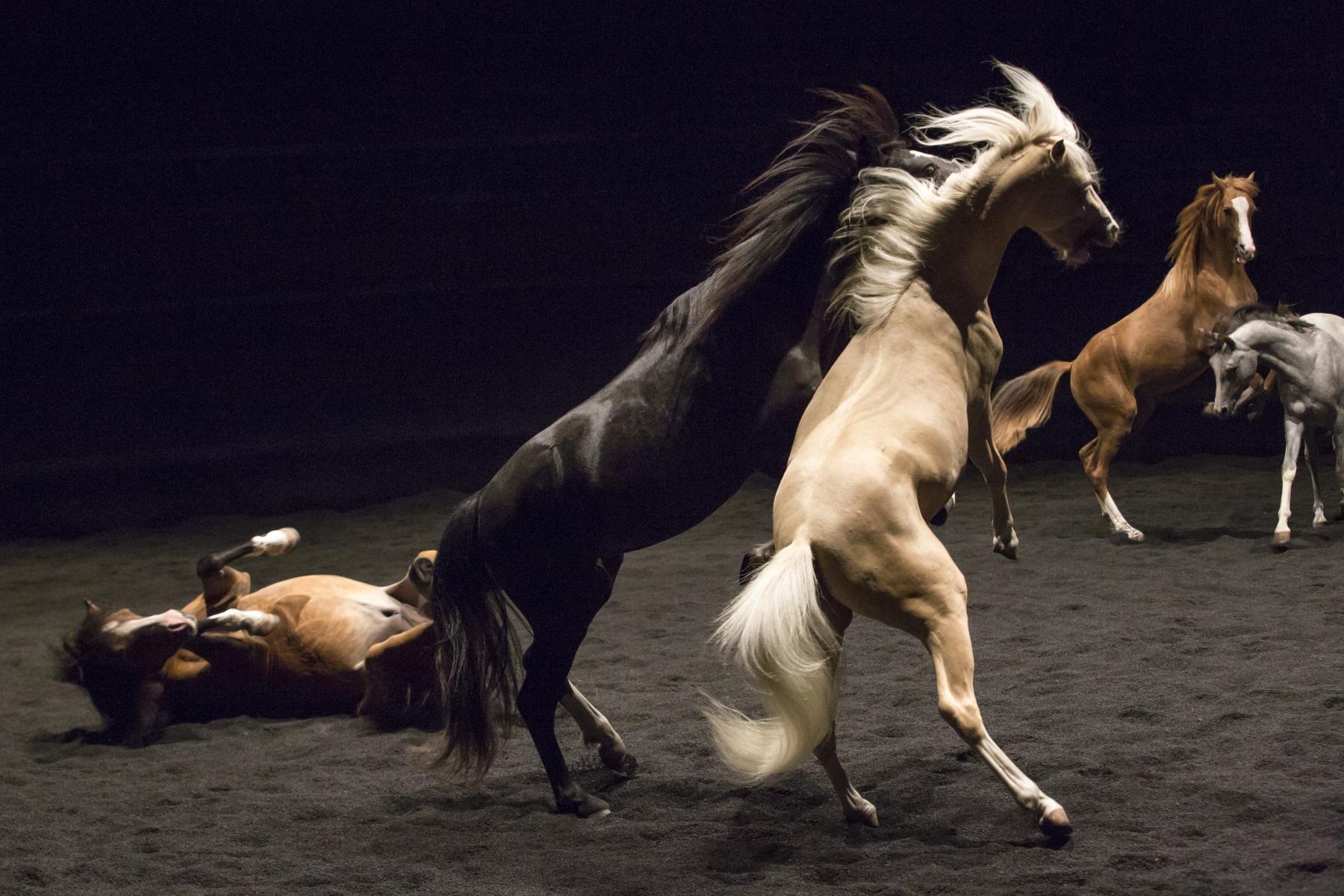Theatre_Equestre_ZINGARO (8)