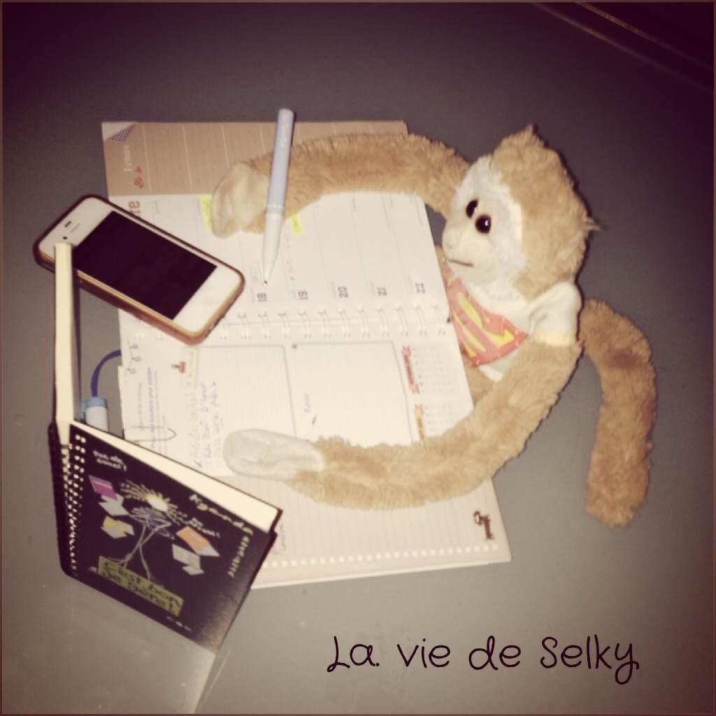 130918 Selky_est_tres_organisee