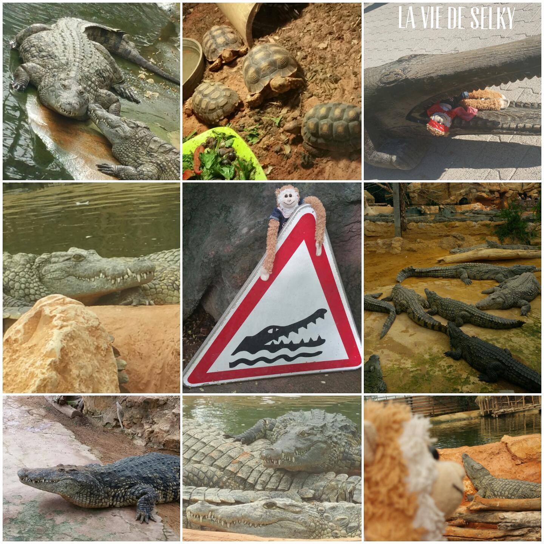 selky ferme crocodiles pierrelatte